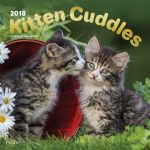 Kitten Cuddles 2018 Square Wall Calendar Front Cover - Plato Calendars All Rights Reserved