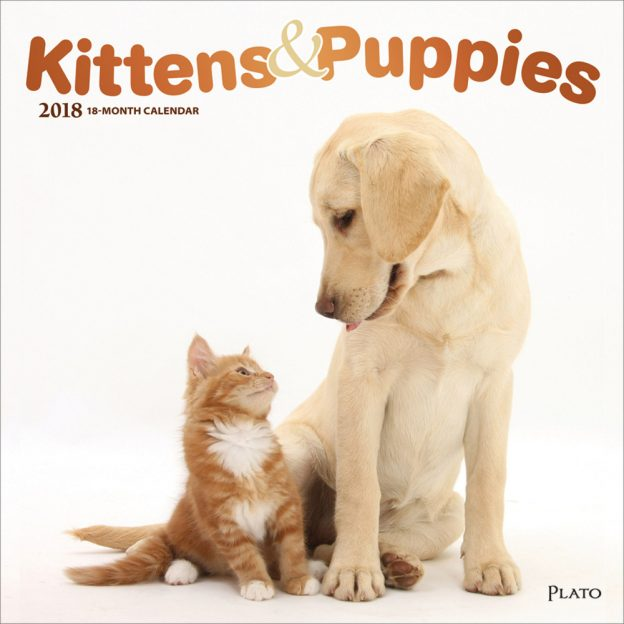 Kittens & Puppies 2018 Square Wall Calendar Front Cover - Plato Calendars All Rights Reserved