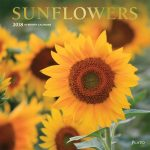 Sunflowers 2018 Square Wall Calendar Front Cover - Plato Calendars All Rights Reserved