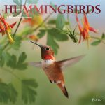 Hummingbirds 2018 Square Wall Calendar Front Cover - Plato Calendars All Rights Reserved