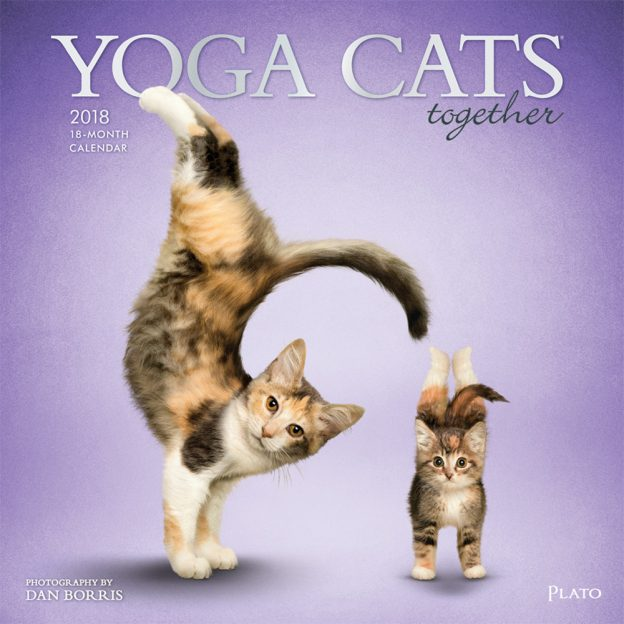 Yoga Cats 2018 Square Wall Calendar Front Cover - Plato Calendars All Rights Reserved