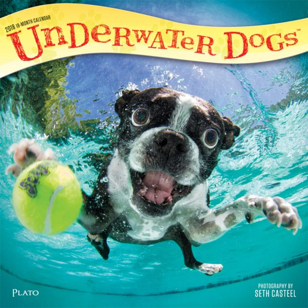 Underwater Dogs by Seth Casteel 2018 Square Wall Calendar Front Cover - Plato Calendars All Rights Reserved