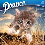 Pounce 2018 Square Wall Calendar Front Cover - Plato Calendars All Rights Reserved