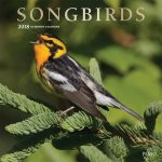 Songbirds 2018 Square Wall Calendar Front Cover - Plato Calendars All Rights Reserved
