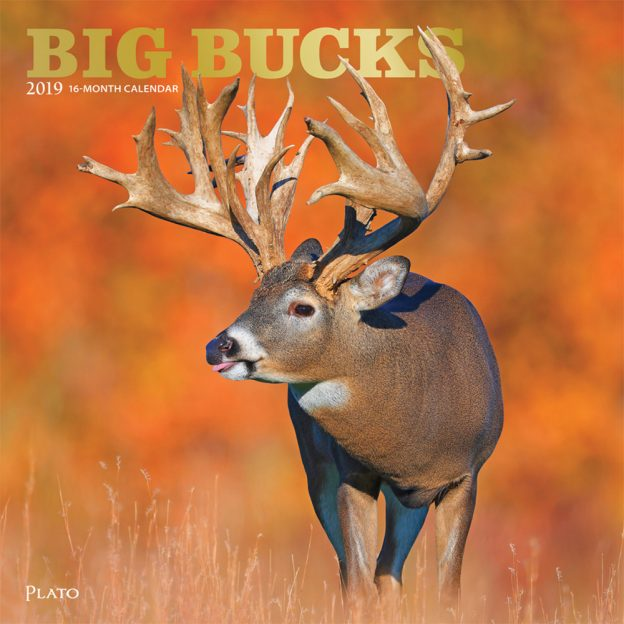 Big Bucks 2019 12 x 12 Inch Monthly Square Wall Calendar with Foil Stamped Cover by Plato, Wildlife Animals Forest Hunting