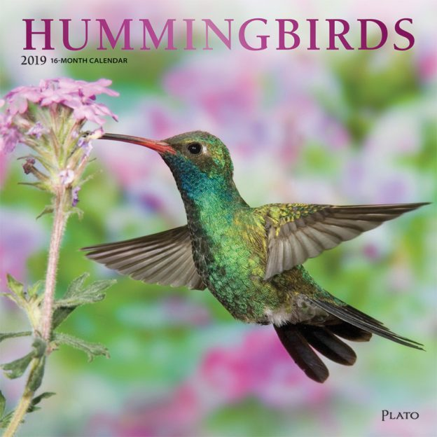 Hummingbirds 2019 12 x 12 Inch Monthly Square Wall Calendar with Foil Stamped Cover by Plato, Animals Wildlife Birds