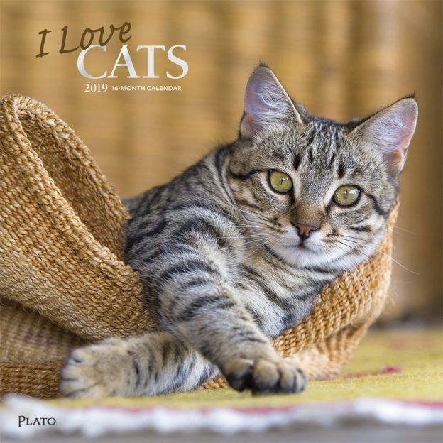 I Love Cats 2019 12 x 12 Inch Monthly Square Wall Calendar with Foil Stamped Cover by Plato, Feline Cat
