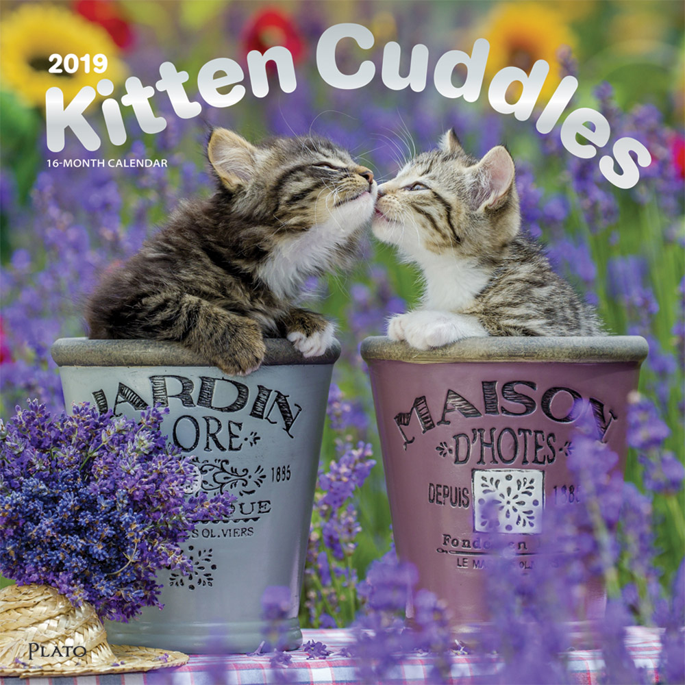 Kitten Cuddles 2019 12 x 12 Inch Monthly Square Wall Calendar with Foil Stamped Cover by Plato, Animals Cute Kittens