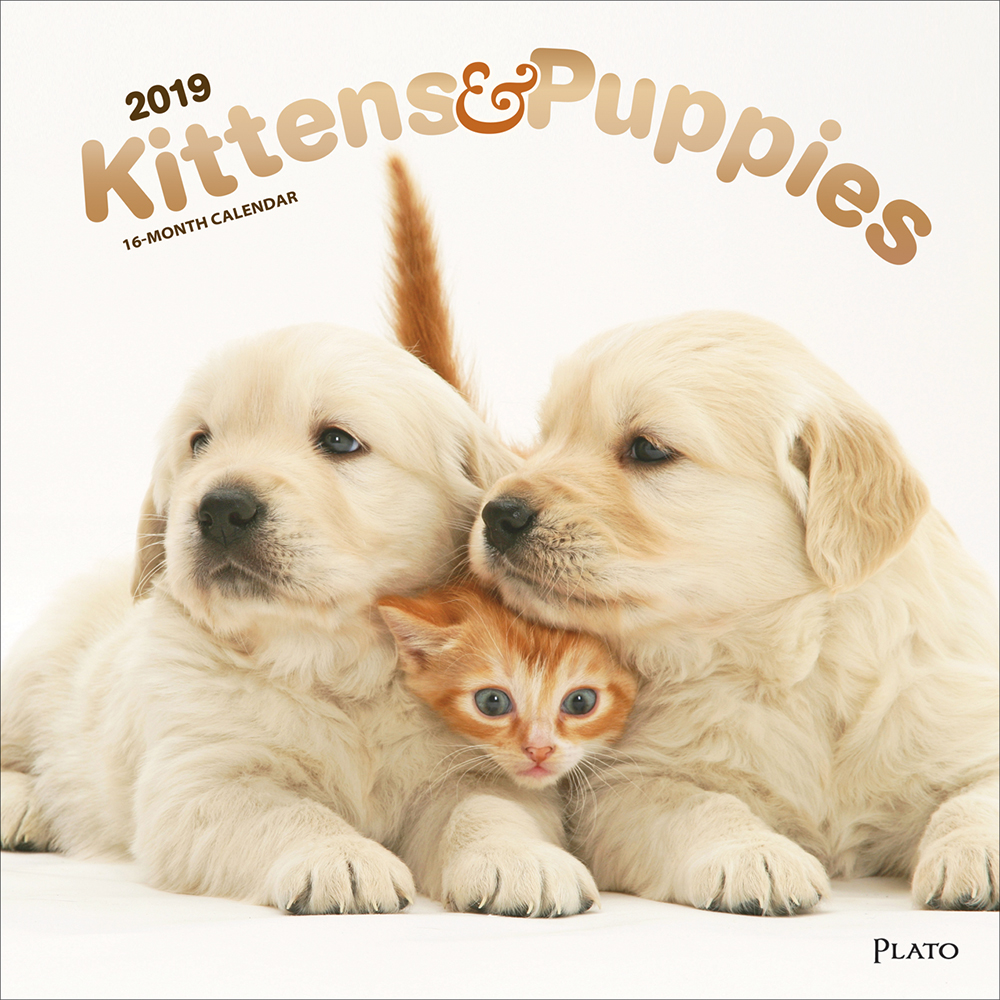Kittens & Puppies 2019 12 x 12 Inch Monthly Square Wall Calendar with Foil Stamped Cover by Plato, Animals Cute Kittens