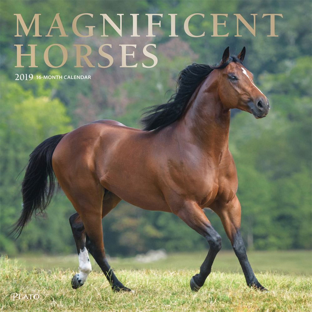 Magnificent Horses 2019 12 x 12 Inch Monthly Square Wall Calendar with Foil Stamped Cover by Plato, Animals Equestrian
