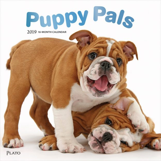 Puppy Pals 2019 12 x 12 Inch Monthly Square Wall Calendar with Foil Stamped Cover by Plato, Animals Dog Breeds Puppies