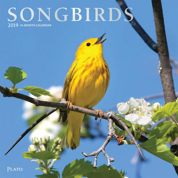 Songbirds 2019 12 x 12 Inch Monthly Square Wall Calendar with Foil Stamped Cover by Plato, Wildlife Animals Birds