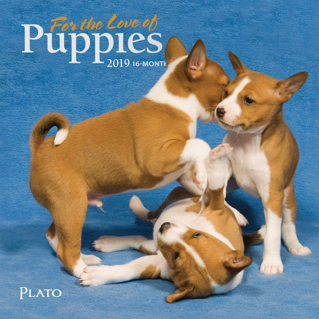 For the Love of Puppies 2019 7 x 7 Inch Monthly Mini Wall Calendar with Foil Stamped Cover by Plato, Animals Dog Breeds Puppies