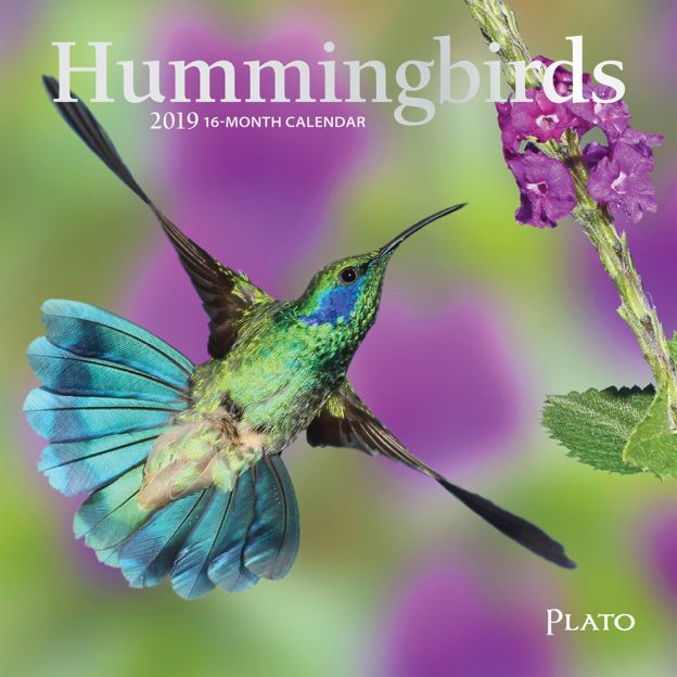 Hummingbirds 2019 7 x 7 Inch Monthly Mini Wall Calendar with Foil Stamped Cover, Animals Wildlife Birds