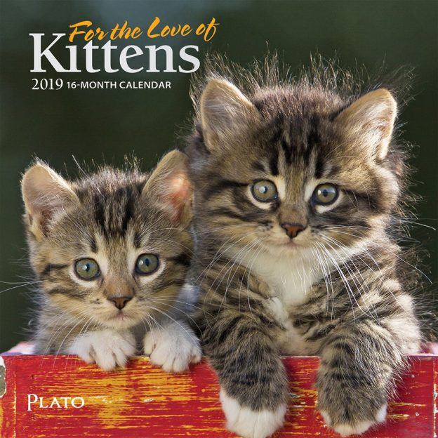 For the Love of Kittens 2019 7 x 7 Inch Monthly Mini Wall Calendar with Foil Stamped Cover by Plato, Animals Cats Kittens Feline