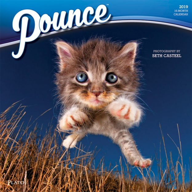 Pounce 2019 12 x 12 Inch Monthly Square Wall Calendar by Plato, Kitten Humor