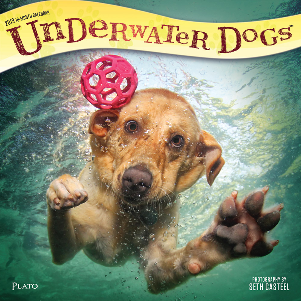 Underwater Dogs 2019 12 x 12 Inch Monthly Square Wall Calendar with Foil Stamped Cover by Plato, Pet Humor Puppy