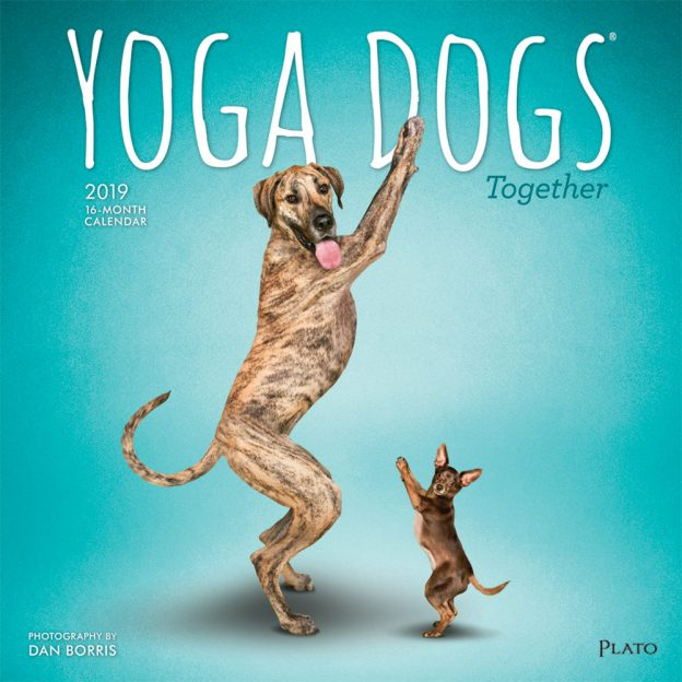 Yoga Dogs Together 2019 12 x 12 Inch Monthly Square Wall Calendar by Plato, Animals Humor Dog