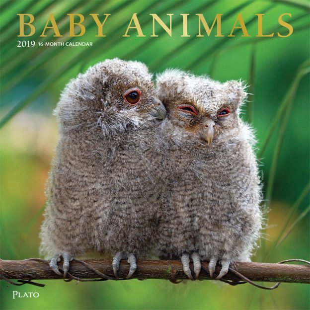 Baby Animals 2019 12 x 12 Inch Monthly Square Wall Calendar with Foil Stamped Cover by Plato, Animals Domestic