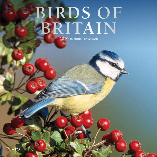 Birds of Britain 2019 12 x 12 Inch Monthly Square Wall Calendar with Foil Stamped Cover by Plato, Animals Wildlife Birds