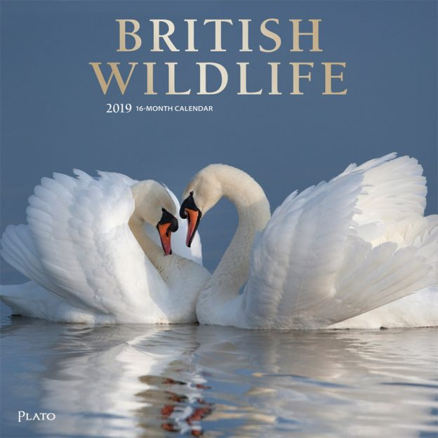 British Wildlife 2019 12 x 12 Inch Monthly Square Wall Calendar with Foil Stamped Cover by Plato, Wildlife Animals Photography