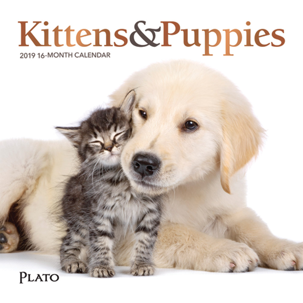 Kittens & Puppies 2019 7 x 7 Inch Monthly Mini Wall Calendar with Foil Stamped Cover by Plato, Animals Cute Kittens