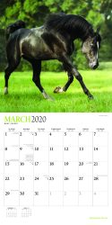 Magnificent Horses 2020 12 x 12 Inch Monthly Square Wall Calendar with Foil Stamped Cover by Plato, Animals Equestrian