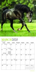 Horse Lovers 2020 7 x 7 Inch Monthly Mini Wall Calendar with Foil Stamped Cover by Plato, Animals Horses