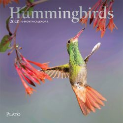 Hummingbirds 2020 7 x 7 Inch Monthly Mini Wall Calendar with Foil Stamped Cover, Animals Wildlife Birds
