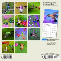 Hummingbirds 2020 7 x 7 Inch Monthly Mini Wall Calendar with Foil Stamped Cover by Plato, Animals Wildlife Birds