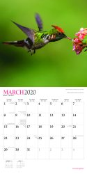 Hummingbirds 2020 12 x 12 Inch Monthly Square Wall Calendar with Foil Stamped Cover by Plato, Animals Wildlife Birds
