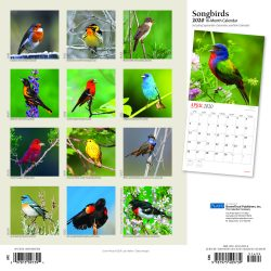 Songbirds 2020 12 x 12 Inch Monthly Square Wall Calendar with Foil Stamped Cover by Plato, Wildlife Animals Birds