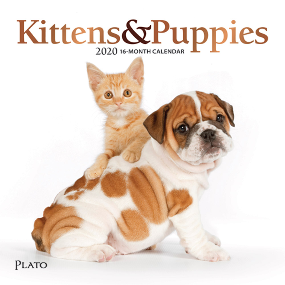 Kittens & Puppies 2020 7 x 7 Inch Monthly Mini Wall Calendar with Foil Stamped Cover by Plato, Animals Cute Kittens