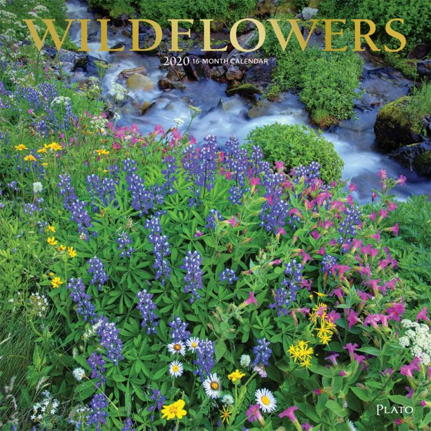 Wildflowers 2020 12 x 12 Inch Monthly Square Wall Calendar with Foil Stamped Cover by Plato, Flower Outdoor Plant