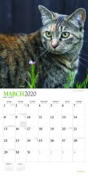 I Love Cats 2020 12 x 12 Inch Monthly Square Wall Calendar with Foil Stamped Cover by Plato, Feline Cat