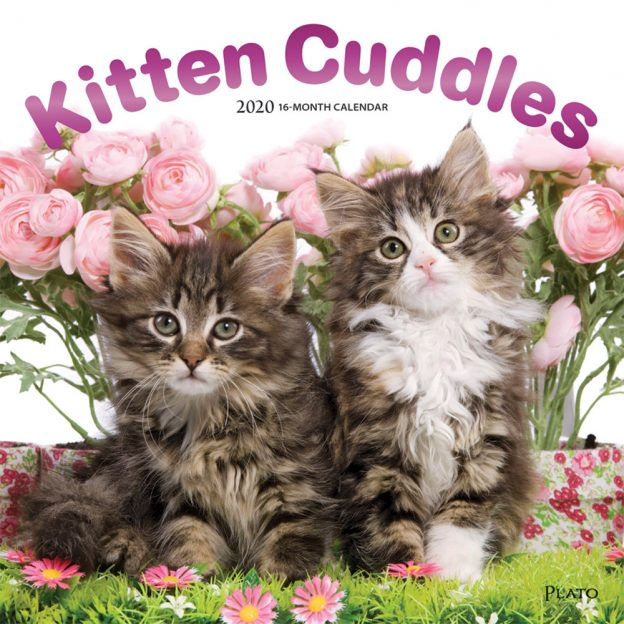 Kitten Cuddles 2020 12 x 12 Inch Monthly Square Wall Calendar with Foil Stamped Cover by Plato, Animals Cute Kittens