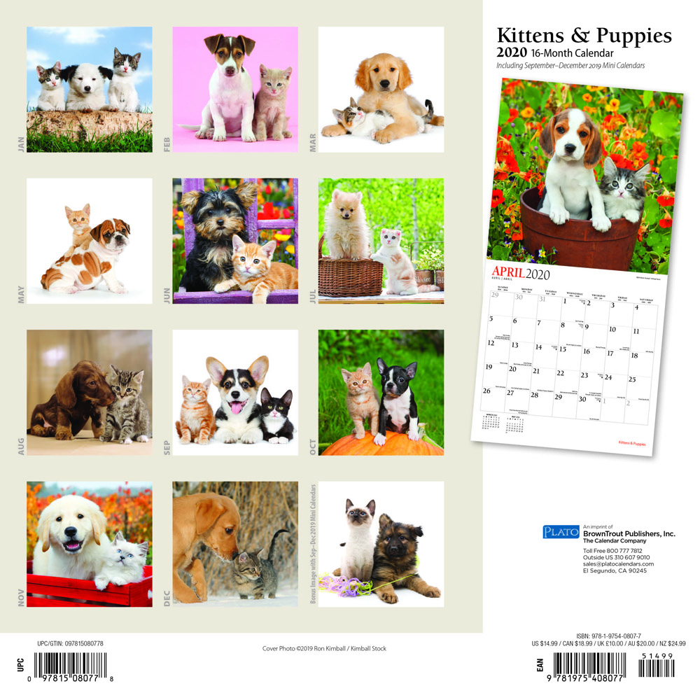 Kittens & Puppies 2020 12 x 12 Inch Monthly Square Wall Calendar with Foil Stamped Cover by Plato, Animals Cute Kittens