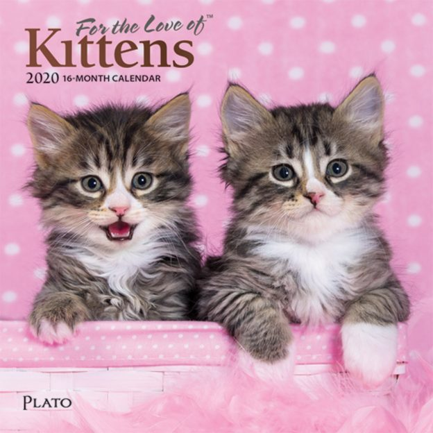 For the Love of Kittens 2020 7 x 7 Inch Monthly Mini Wall Calendar with Foil Stamped Cover by Plato, Animals Cats Kittens Feline