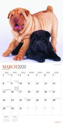 Puppy Pals 2020 12 x 12 Inch Monthly Square Wall Calendar with Foil Stamped Cover by Plato, Animals Dog Breeds Puppies