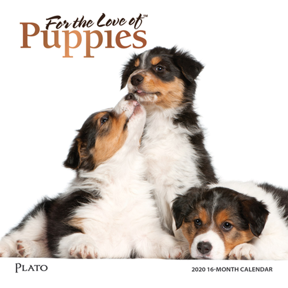 For the Love of Puppies 2020 7 x 7 Inch Monthly Mini Wall Calendar with Foil Stamped Cover by Plato, Animals Dog Breeds Puppies
