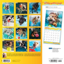 Underwater Dogs 2020 12 x 12 Inch Monthly Square Wall Calendar with Foil Stamped Cover by Plato, Pet Humor Puppy