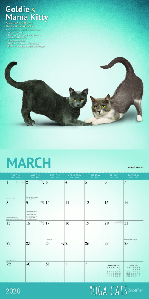 Yoga Cats Together 2020 12 x 12 Inch Monthly Square Wall Calendar by Plato, Animals Humor Cat