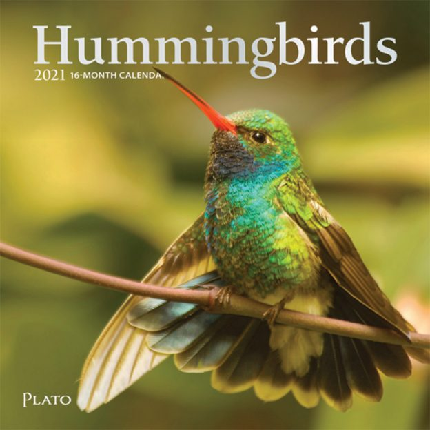 Hummingbirds 2021 7 x 7 Inch Monthly Mini Wall Calendar with Foil Stamped Cover by Plato, Animals Wildlife Birds