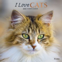 I Love Cats 2021 12 x 12 Inch Monthly Square Wall Calendar with Foil Stamped Cover by Plato, Feline Cat