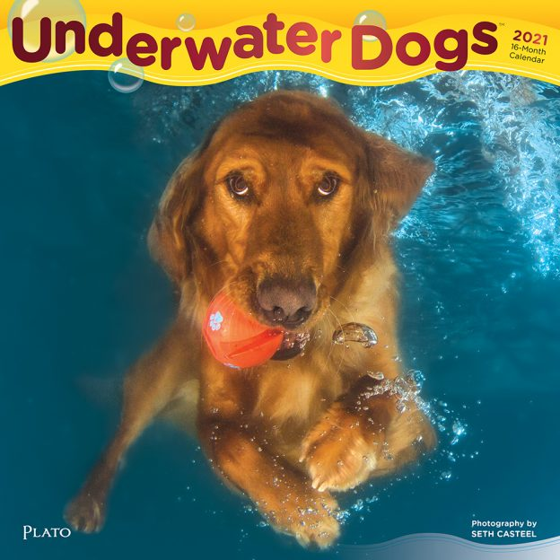 Underwater Dogs 2021 12 x 12 Inch Monthly Square Wall Calendar with Foil Stamped Cover by Plato, Pet Humor Puppy