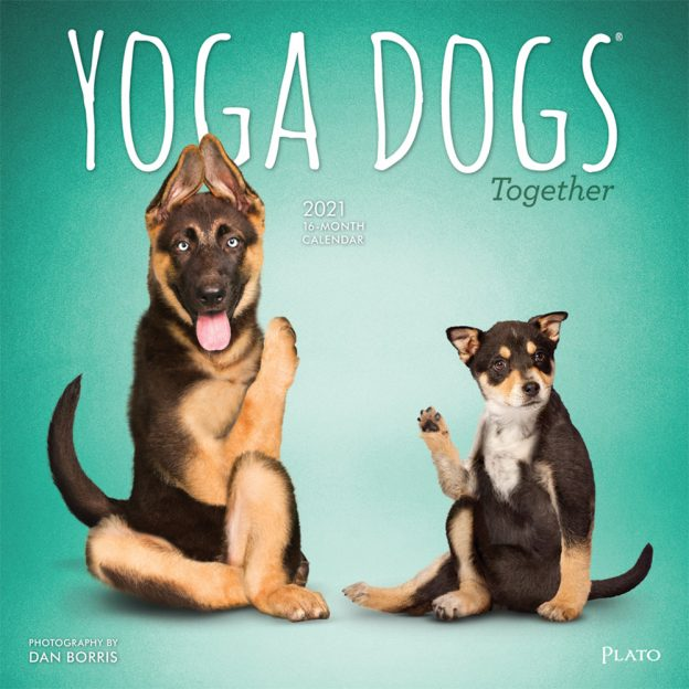 Yoga Dogs Together 2021 12 x 12 Inch Monthly Square Wall Calendar by Plato, Animals Humor Dog
