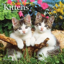 For the Love of Kittens 2021 7 x 7 Inch Monthly Mini Wall Calendar with Foil Stamped Cover by Plato, Animals Cats Kittens Feline