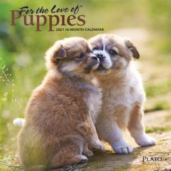 For the Love of Puppies 2021 7 x 7 Inch Monthly Mini Wall Calendar with Foil Stamped Cover by Plato, Animals Dog Breeds Puppies