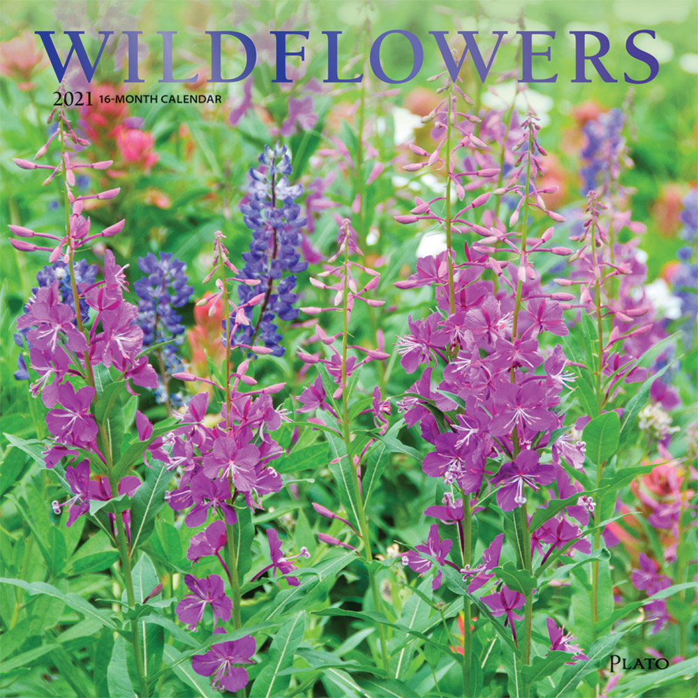 Wildflowers 2021 12 x 12 Inch Monthly Square Wall Calendar with Foil Stamped Cover by Plato, Flower Outdoor Plant