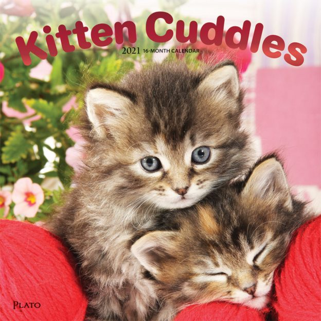 Kitten Cuddles 2021 12 x 12 Inch Monthly Square Wall Calendar with Foil Stamped Cover by Plato, Animals Cute Kittens